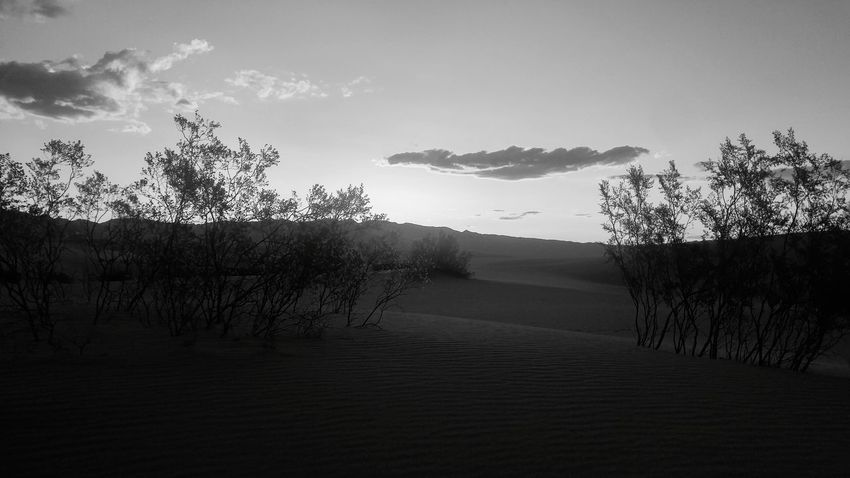 Desert Sunrise Desert Sunrise Desert Desert Beauty Desert Landscape B&w Silhouette Scenics Landscape Dawn The Oakstrails EyeEmNewHere Art Is Everywhere The Oakstrails Photos Oakstrails Photos The Week On EyeEm Outdoors Expressionism Photography Sunset Nature Tree Beauty In Nature Cloud - Sky Tranquility Sky No People Perspectives On Nature
