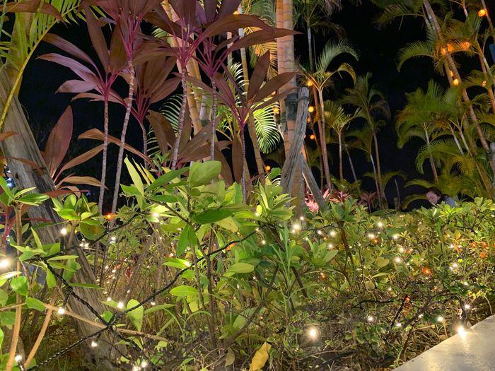 叢 Growth Plant No People Green Color Nature Beauty In Nature Tree