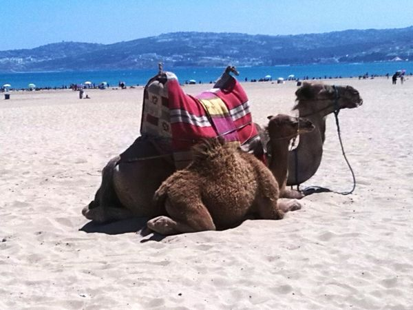 Salam aleikum Morocco Beach Relaxing Time Water Swimming Other Country Camellos Camello Arena Clear