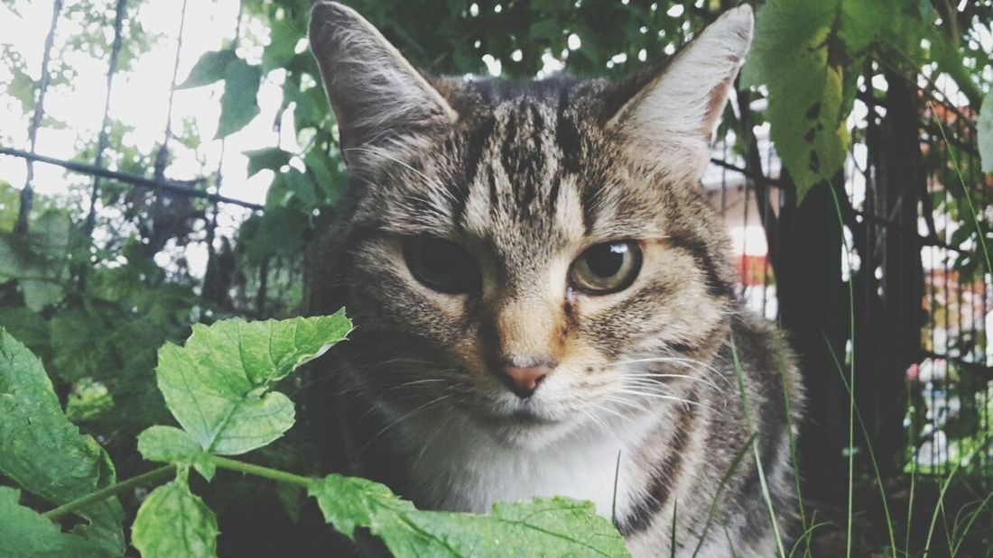 Cat Cat Watching Cute Pets Pets Cats Animals Special👌shot Lovely Cute Animal Photography ♡♡♡