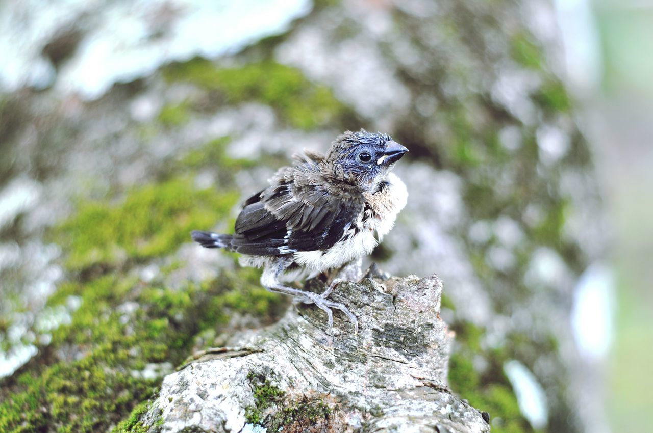 Close-Up Of Young Bird On Wood