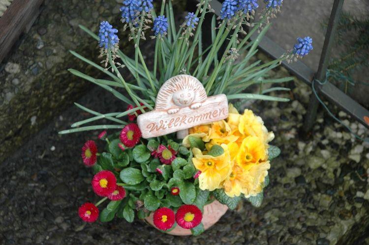 Mit Nikon D70 Wohnglück s Flowers Welcome Today