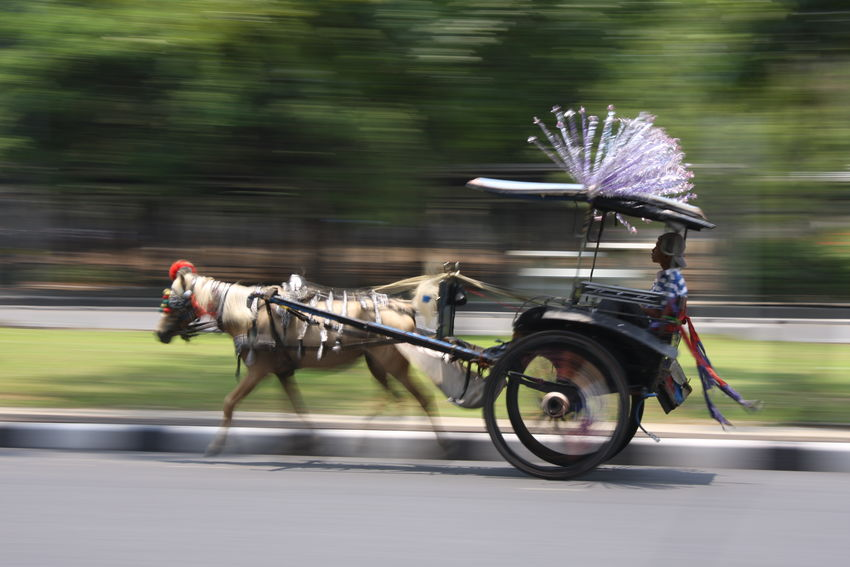 Panning Delman Animal Themes Blurred Motion Day Domestic Animals Horse Horse Cart Mode Of Transport Motion No People One Animal Outdoors Road Side View Speed Street Transportation
