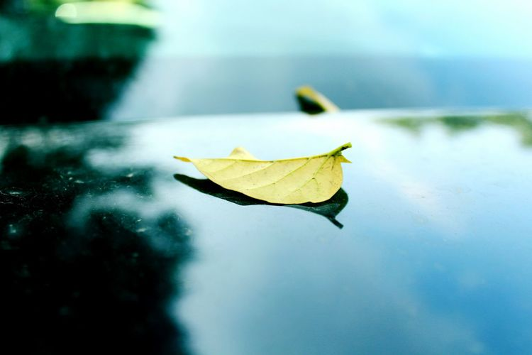Leaf On Car Yellow Leaf Yellow Leaf 🍂 Black Car Mypointofview Street Photography Hanging Out Check This Out Lovely Weather Photography March 2016