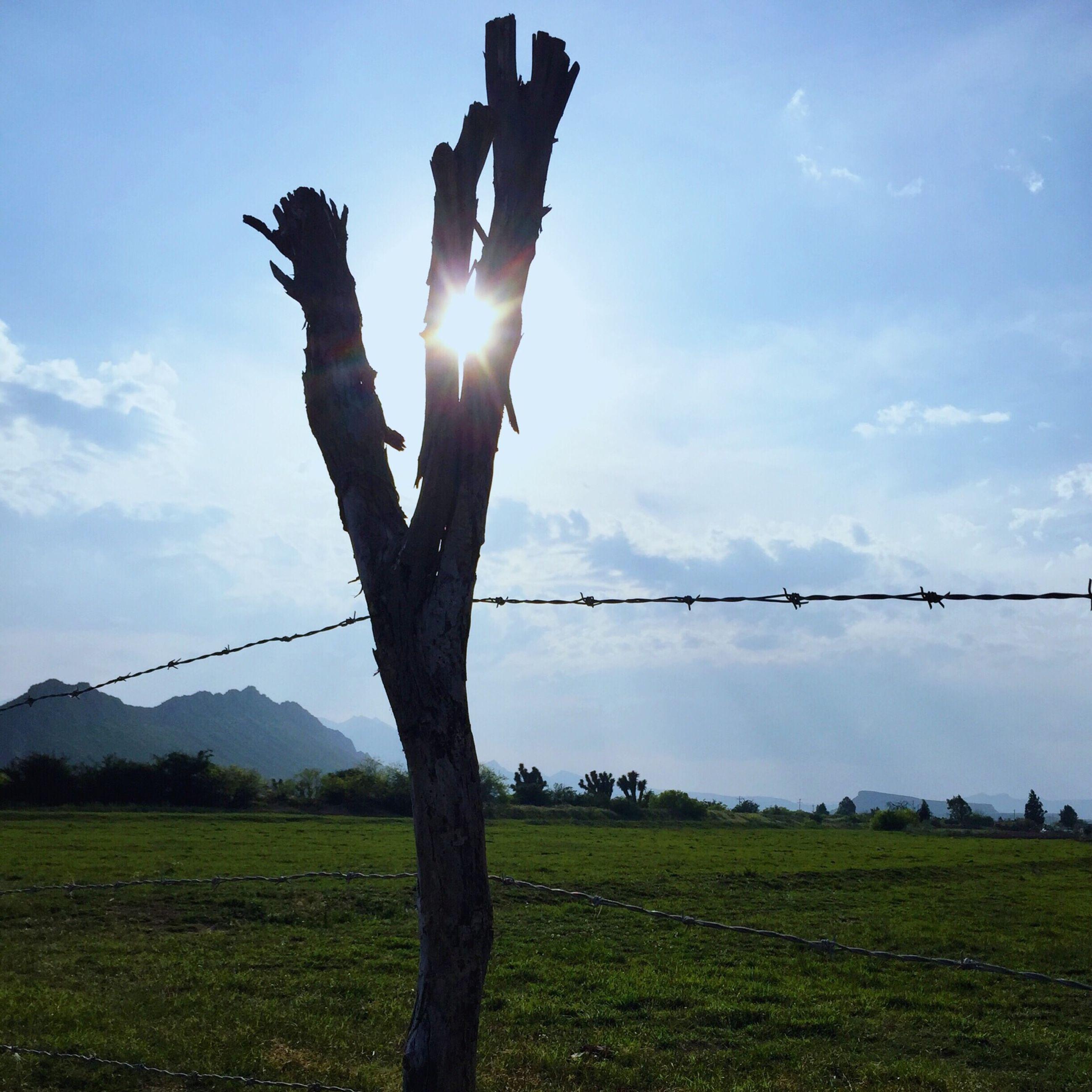 sun, tranquility, sky, sunlight, tranquil scene, sunbeam, field, grass, landscape, nature, beauty in nature, scenics, lens flare, growth, tree, tree trunk, sunny, grassy, non-urban scene, blue