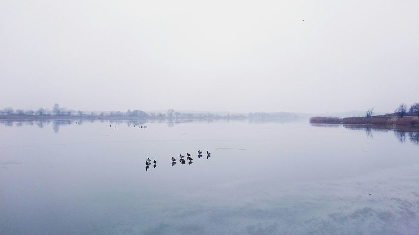 Ducks Time To Reflect VSCO EyeEm Best Edits EyeEm Nature Lover Negative Space