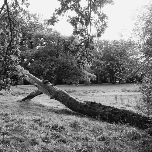 Tree trunk Nature No People Tree Tranquility Outdoors Field Beauty In Nature Landscape Black And White Photography Scenics Monochrome