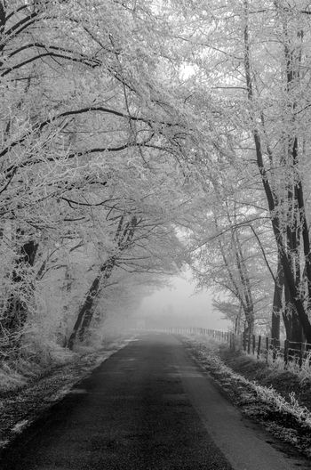France Hiver Hiver 2016 Loire Riorges Road Road With Trees Roanne Tree Trees Winter Winter_collection Wintertime Winterwonderland Welcome To Black