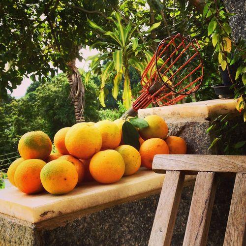 Orange Fruits On Retaining Wall At Yard