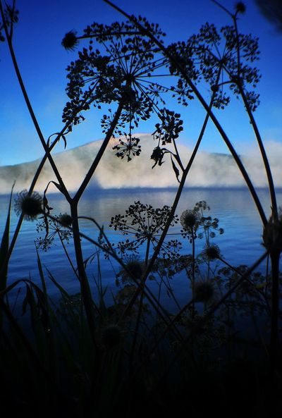 Tranquil Scene Lake Growth Silhouette Water Beauty In Nature Tranquility Nature Blue Scenics Sky Plant Calm Day Growing In Front Of Majestic Fragility