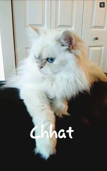 I Love My Cat ♥