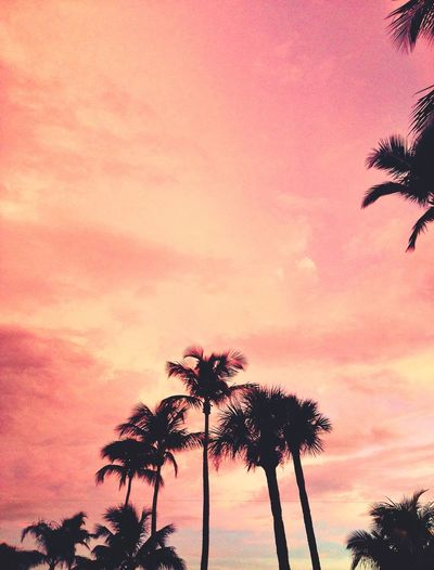 Pink Sky Palm Trees Summer Sunset Nature Travel Photography Florida Fort Myers United States