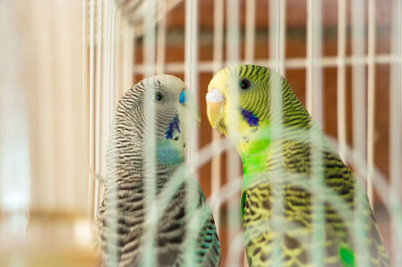 Close-Up Of Parrots In Cage