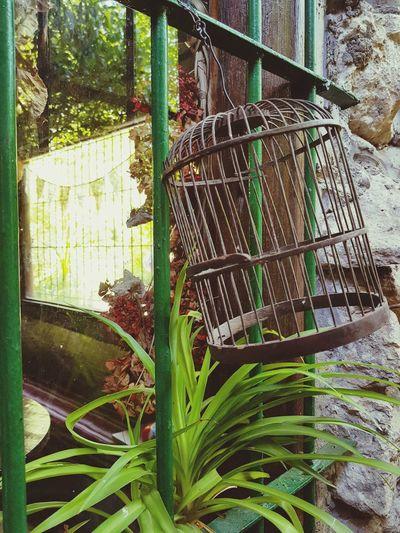 Freedom Cage No