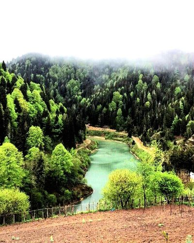 Turkey EyeEm Selects Nature Nopeople Enyoing Green Green Green!