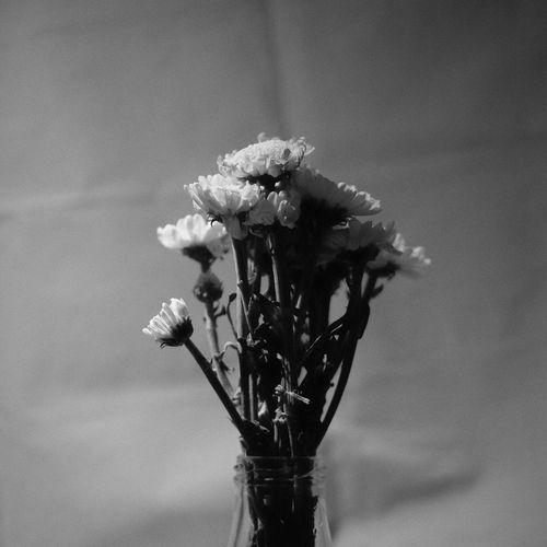 Fragility Petal Vase Blooming Blackandwhite The Still Life Photographer - 2018 EyeEm Awards