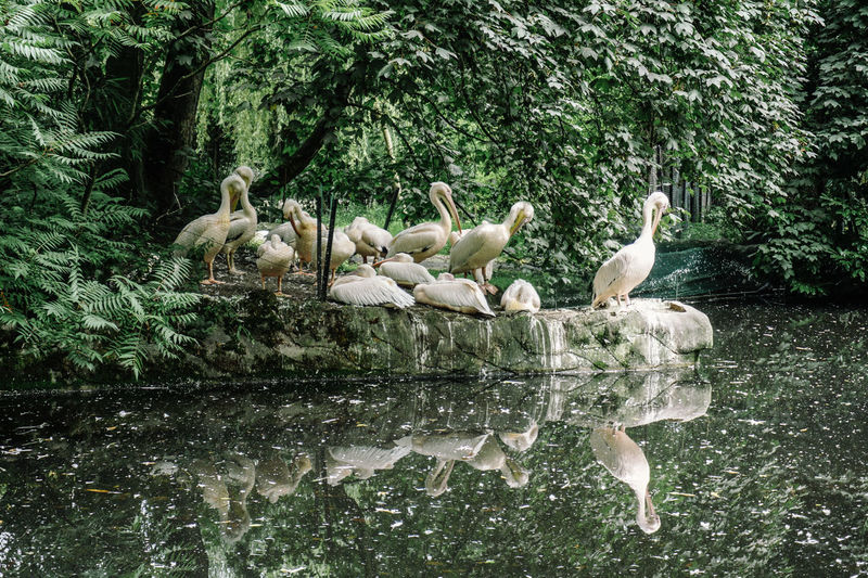 Animal Family Animal Themes Animal Wildlife Animals In The Wild Bird Day Goose Lake Large Group Of Animals Nature No People Outdoors Swan Togetherness Tree Water Waterfront Wildlife Young Animal Young Bird