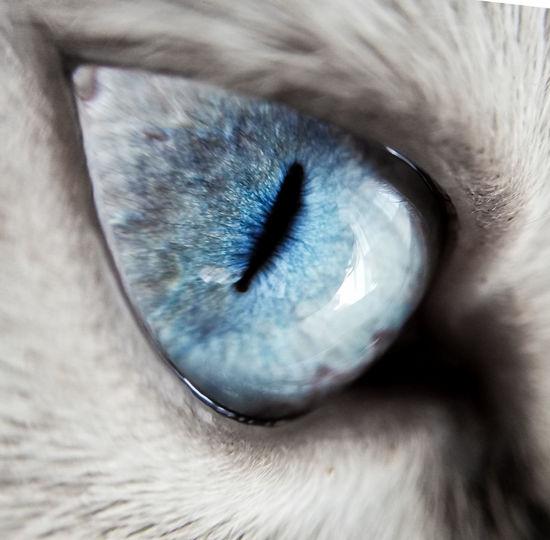 Extreme close-up of animal eye