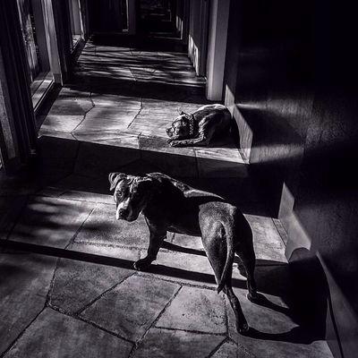 My loves Dog Black And White