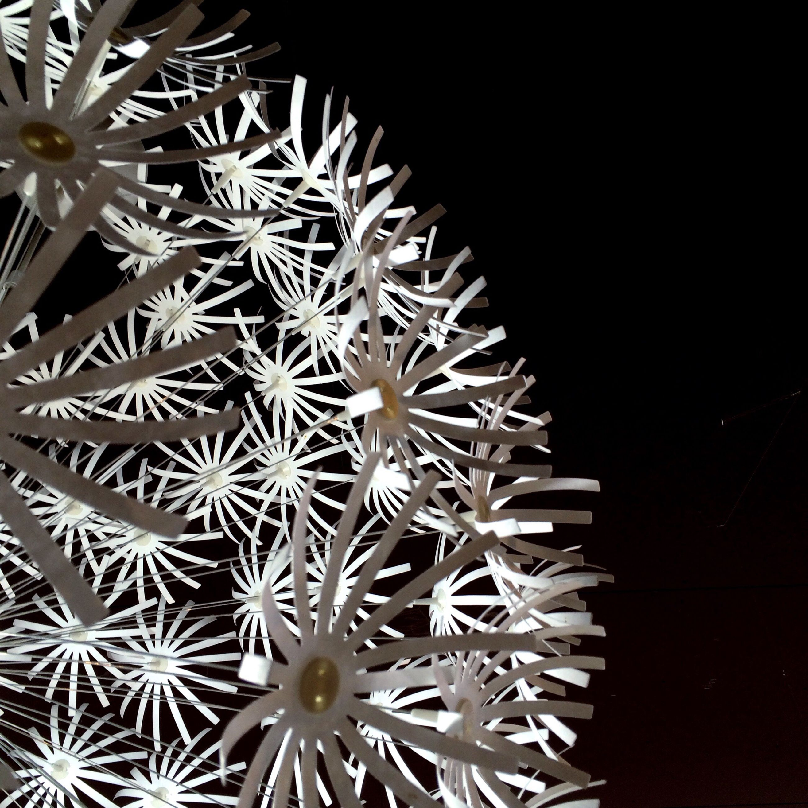 night, flower, white color, growth, close-up, nature, low angle view, fragility, plant, beauty in nature, no people, copy space, outdoors, clear sky, black background, illuminated, freshness, winter, tree