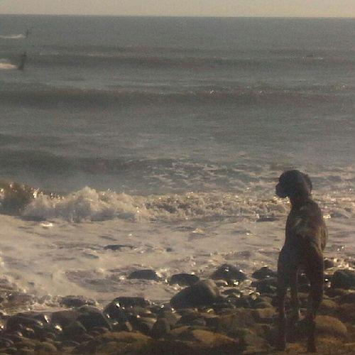 Dogwishinghecouldsurf Oceandog