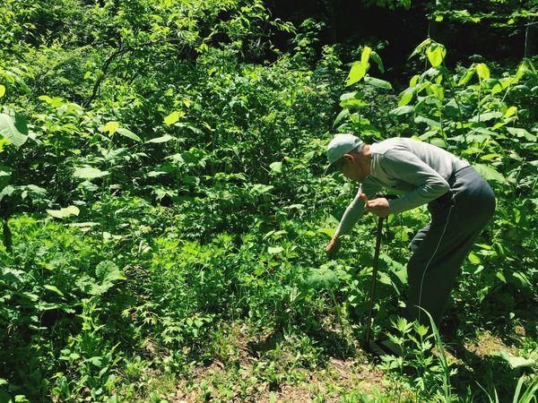 じいちゃんの足腰リハビリの為、とある山へ山菜取りのお供。 Iphonegraphy Grandfather