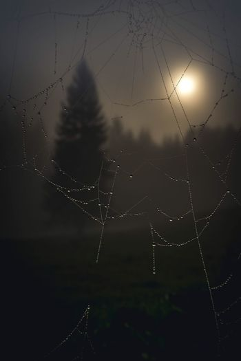 Spider Web Spider Animal Themes Web One Animal Nature Sun No People Sunset Outdoors Fragility Animals In The Wild Close-up Animal Wildlife Sky Beauty In Nature Day Spinnennetz Spinne Netz
