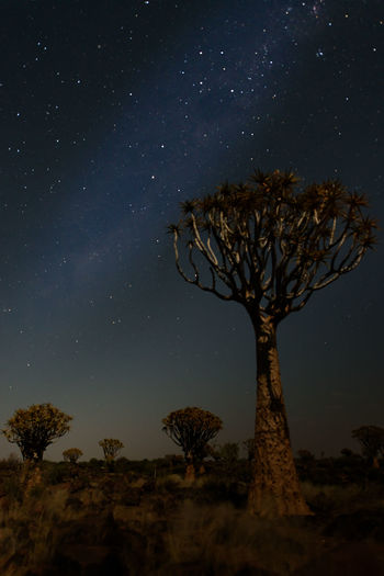Astronomy Beauty In Nature Field Galaxy Landscape Milky Way Namibia Nature Night No People Outdoors Quivertree  Scenics Sky Space Space And Astronomy Star - Space Star Field Tree Tree Trunk
