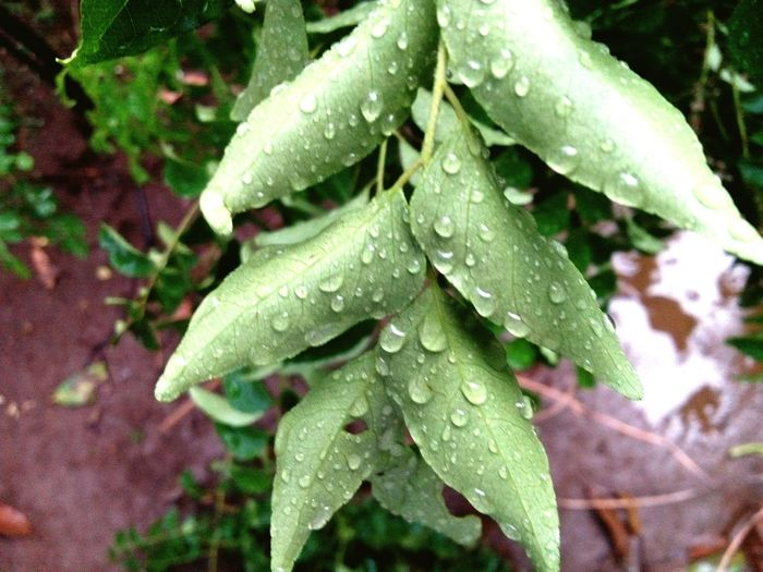 Leaves express Their smile while raining