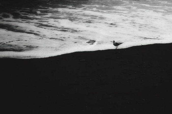 Sea Seaside Birds Bird Bird Photography Water Water_collection Blackandwhite Black And White Black & White Black&white Blackandwhite Photography Black And White Photography Light Light And Shadow Shadow Creative Light And Shadow Shadows & Lights Leica D-lux Typ109 Showcase: January