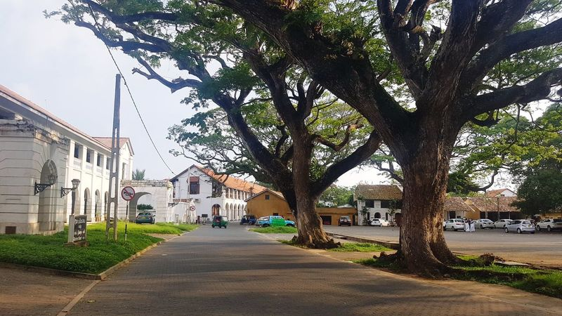 Building Exterior Street Tree Architecture Outdoors Road Tourism Destination Tourism Historical Galle Fort Dutch Fort Old Tree Sri Lanka Tropical Climate Nature Tree