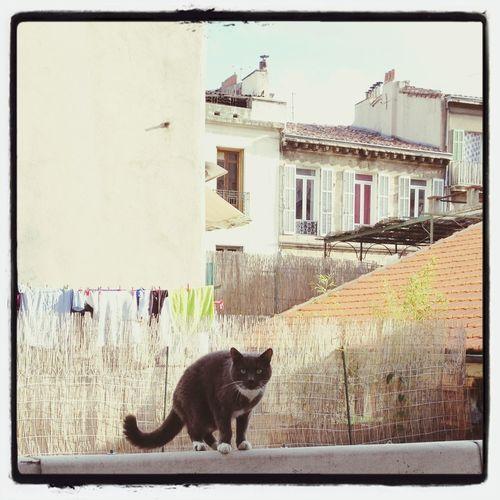 Planetemarseille Cat