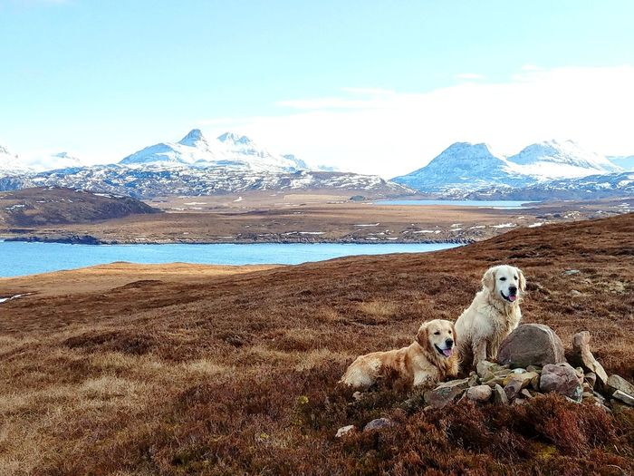 Mountain Dogs Sea Scotland Highlands Achiltibuie Stac Pollaidh Go Higher Mountain Snow Pets Water Portrait Cold Temperature Dog Looking At Camera Sky Snowcapped Mountain Shore