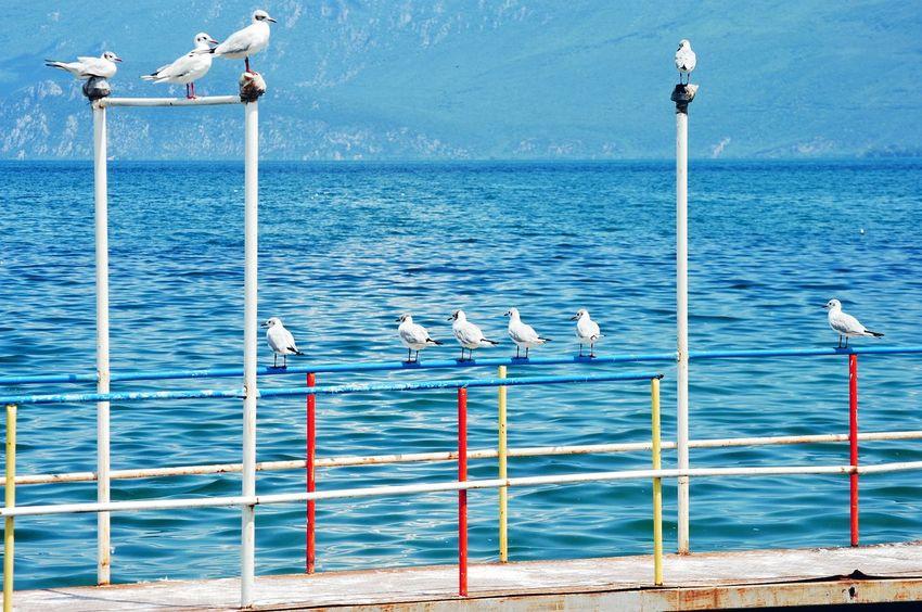 birds 10 Bird Flamingo Water Sea Flying Seagull Beach Blue Colony Flock Of Birds Sea Bird