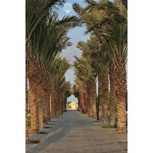 تأملت نهاية الطريق إلى أين يأخذني ووجدت بأني بين بدايت الطريق وتهت في نهاياته.. السعودية  جدة كورنيش_الحمراء فوتو_العرب تصويري المزروعي jeddah jeddah_igers saudi @seemygulf @cameraty1