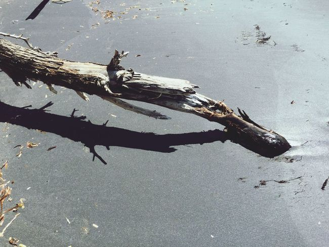 Black Sand Beach Light And Shadow Driftwood Dried Branch