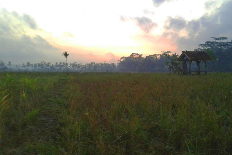 Nature Rice Rice Paddy Rice Field Rice Fields  Rice Planting Ricefield Ricefield View Ricefileds Sky