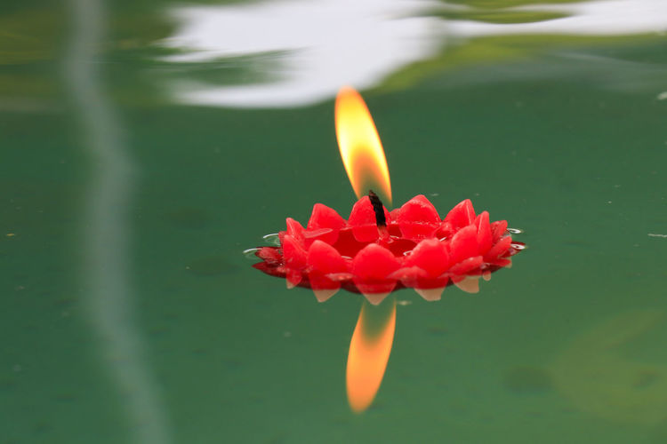 Close-up of red flower floating on water