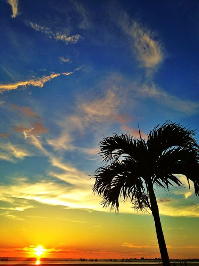 Beachphotography Beach Sunset Sunset Silhouettes Palm Trees Sand Colorful Sky Florida Fort Myers United States