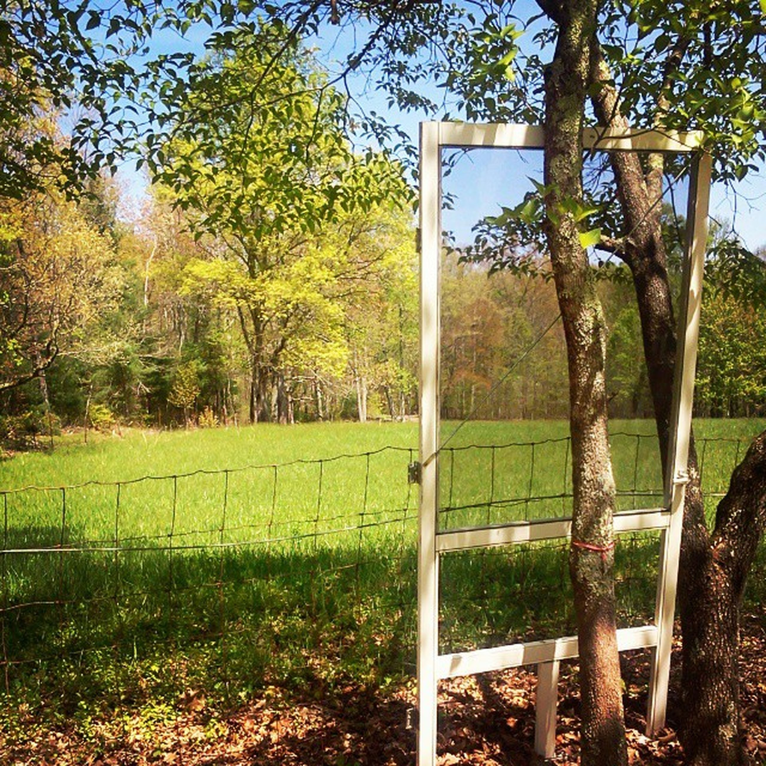 tree, grass, green color, growth, field, fence, sunlight, tranquility, wood - material, nature, tree trunk, day, sky, grassy, landscape, tranquil scene, no people, branch, clear sky, outdoors