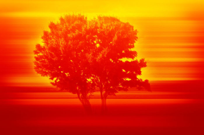 Serengeti Art Is Everywhere ArtWork Burning Hot Day Nature Serengeti National Park Summertime Tree Art Arts Culture And Entertainment Close-up Day Drawing Heat Nature Nature_collection No People Oil Orange Color Outdoors Red Serengeti Sky Studio Shot Summer Sunset Tree Warm