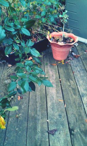 Garden Plants And Flowers Cavingarden Relaxing