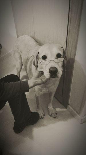 A littel old dog