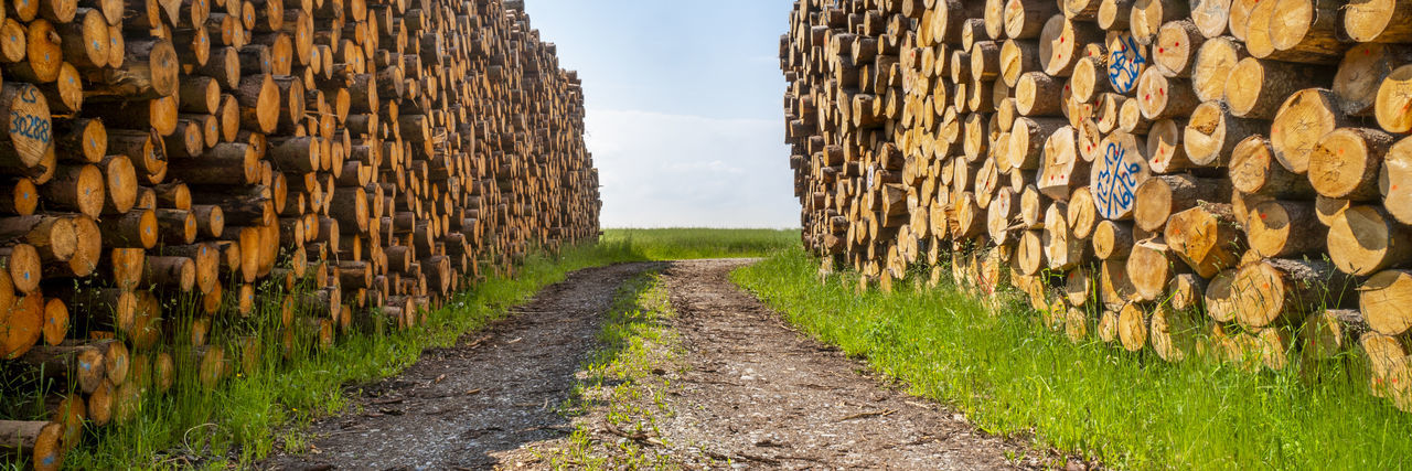 Stack of logs on road amidst field