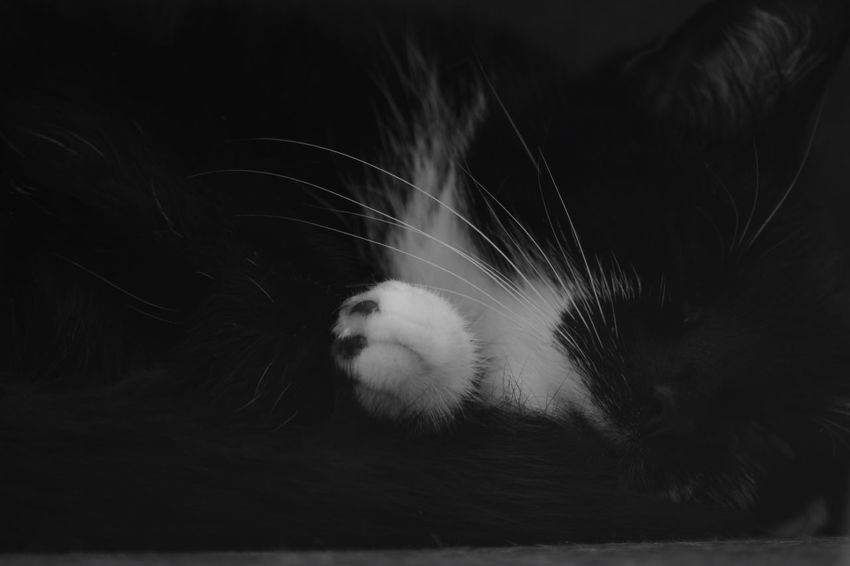 Mammal Focus On Foreground Animals In The Wild Cat Animal Wildlife Feline Domestic Indoors  Night Pets Vertebrate Fragility Domestic Animals Whisker