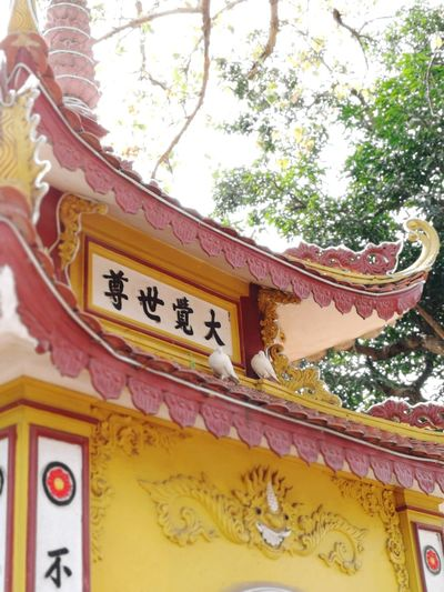 Everlasting Love Bird Vietnam Pagoda Pagoda Pigeon Religion Hanoi Vietnam Yellow Red Roof Temple - Building Buddhist Temple
