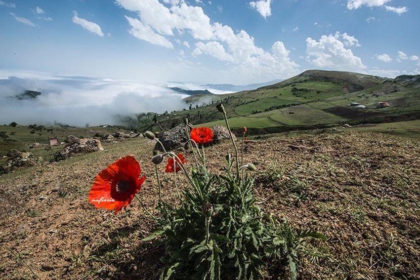 Spring Into Spring Iran Talesh Spring Nature