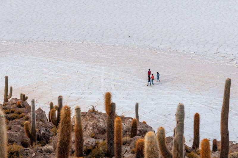 Panoramic shot of people on land during winter