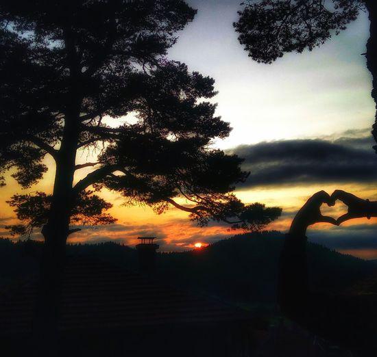 Tree Sunset Gunbatimi Gunbatarken Kalp I Love Nature! I Love My Village Günbatımı😉 Aşksın Neredesin Where Bolu..TURKEY Boluda Ovacık Yaylasi Yayla Havası
