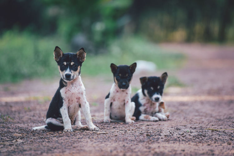 Cute small dogs sitting on floor.